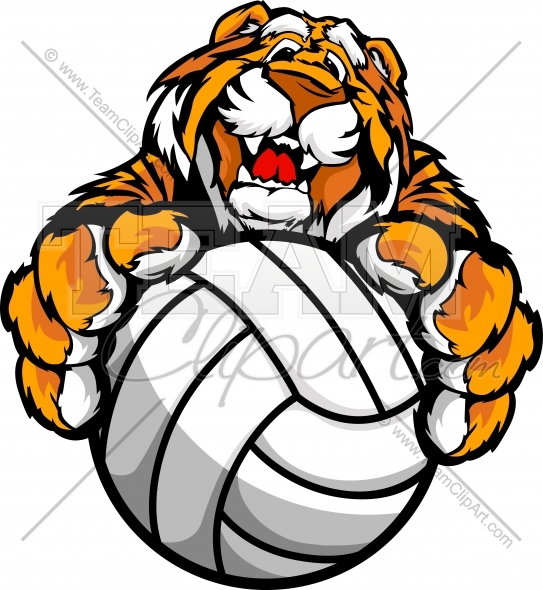 543x590 Cute Happy Tiger Mascot With Volleyball Ball In Paws Vector