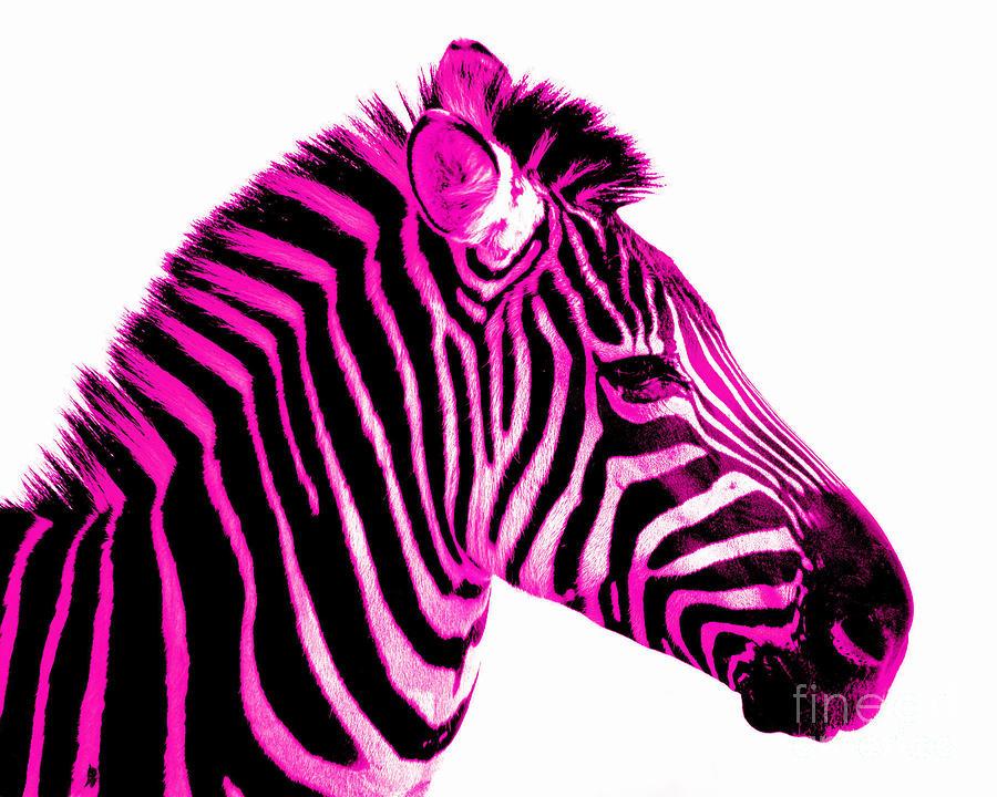 900x720 Colorful Zebra Cliparts