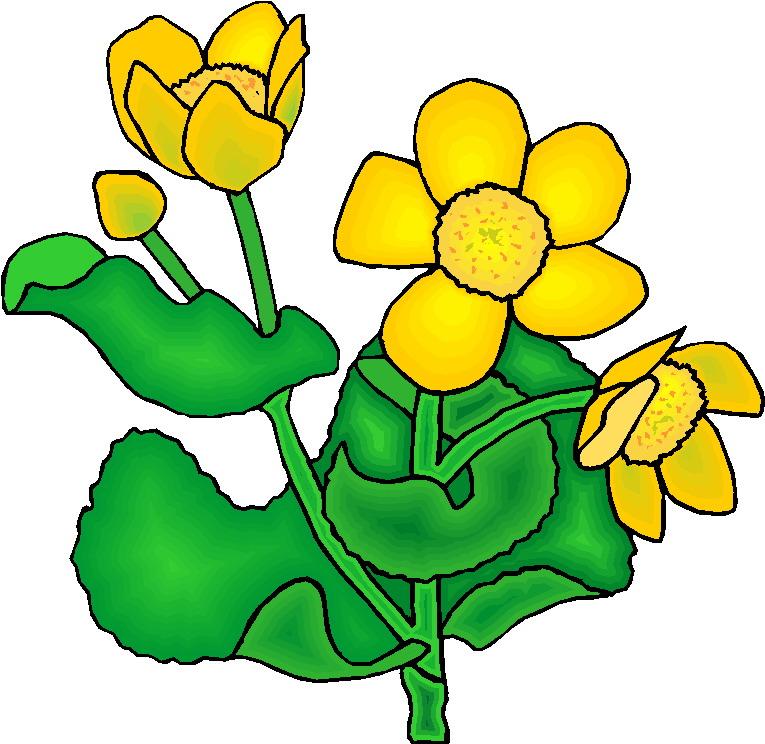 765x744 Clip Art Flowers And Plants Plants