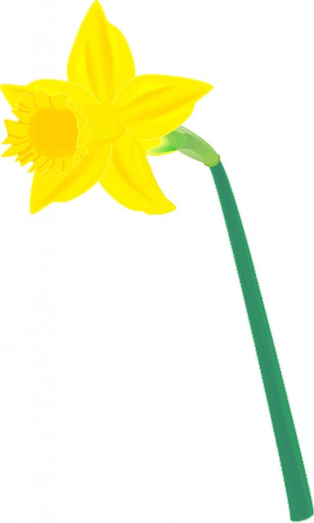 Daffodil Flower Clipart