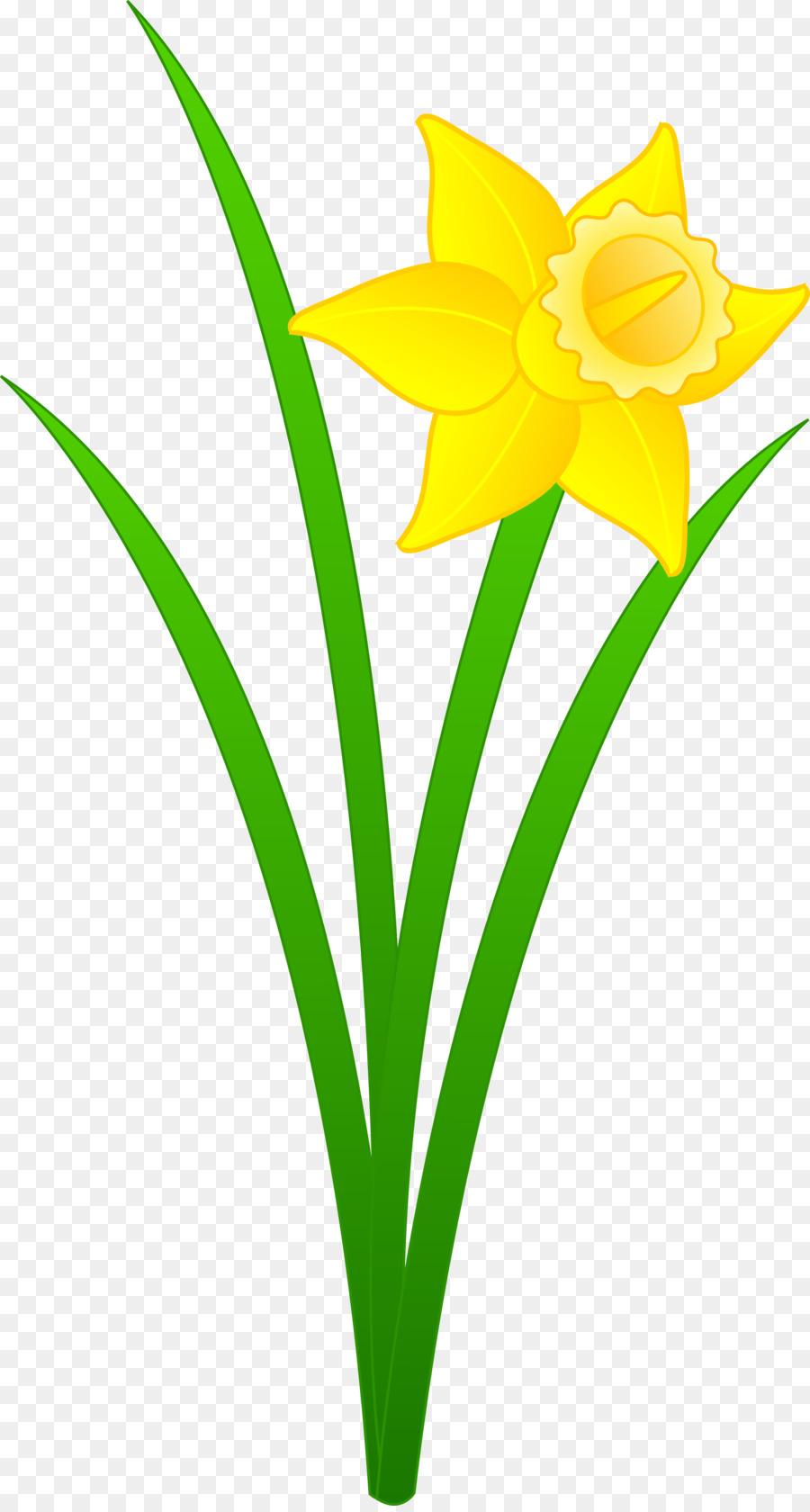 900x1680 Daffodil Free Content Clip Art