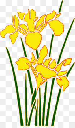 260x440 Daffodil Png And Psd Free Download