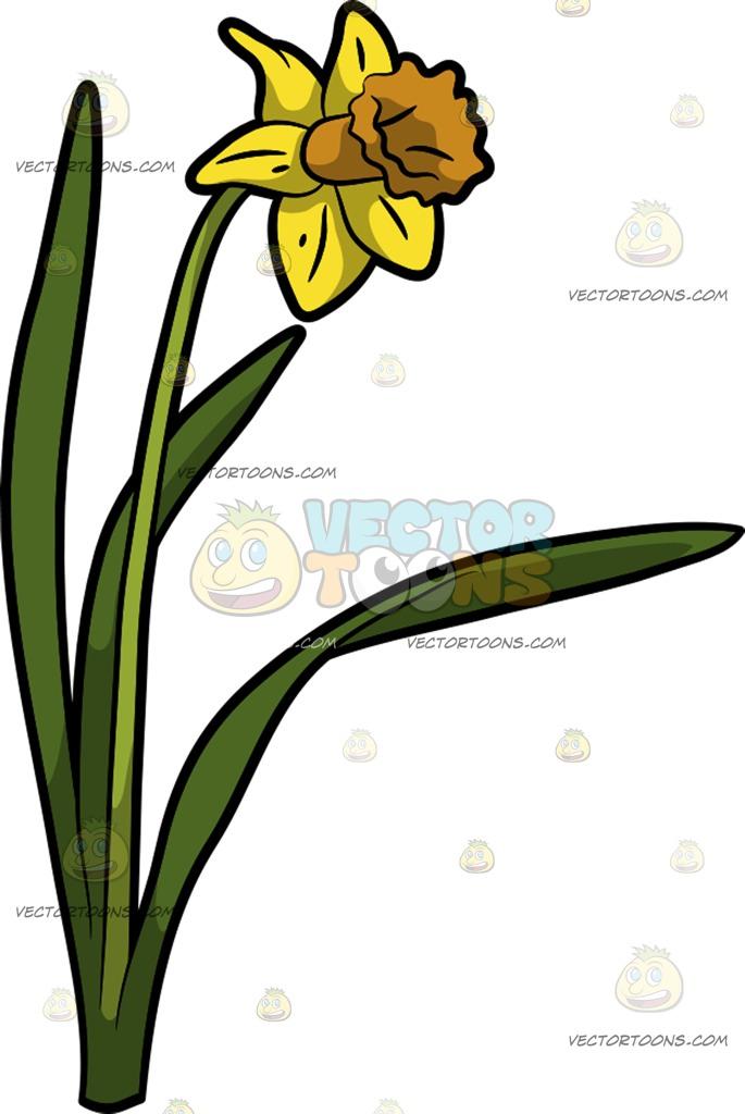 685x1024 A Pretty Daffodil Flower Cartoon Clipart Vector Toons