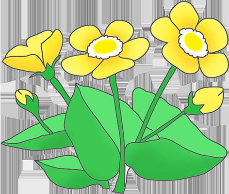 472x401 Daffodil Clipart Sketch