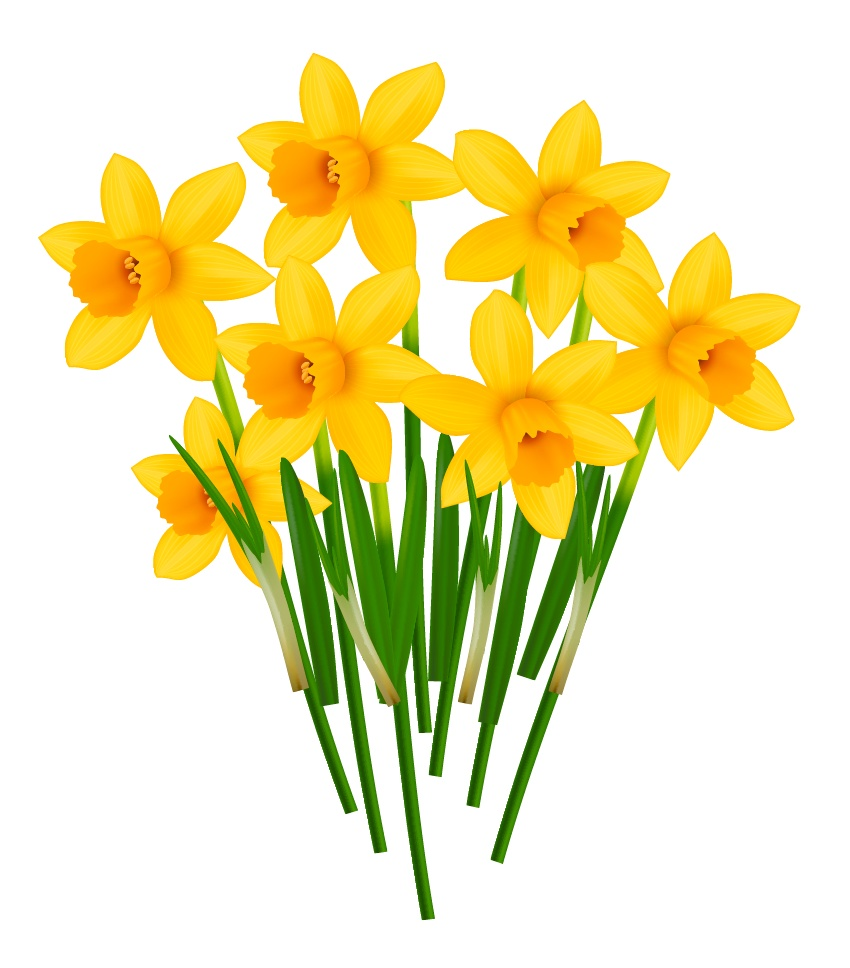 850x968 How To Create A Pot Of Daffodils With Gradient Mesh In Adobe