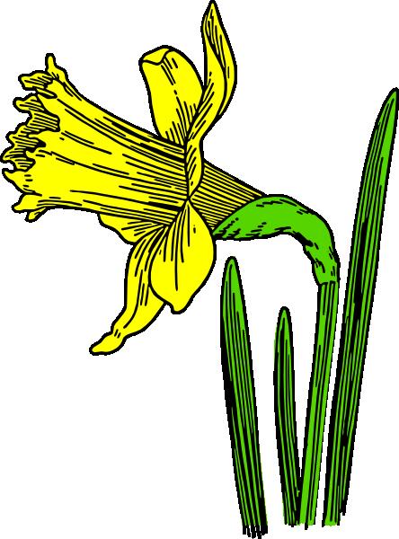 444x600 Single Daffodil Clip Art