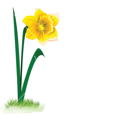 380x400 Buttercup Clipart Narcissus