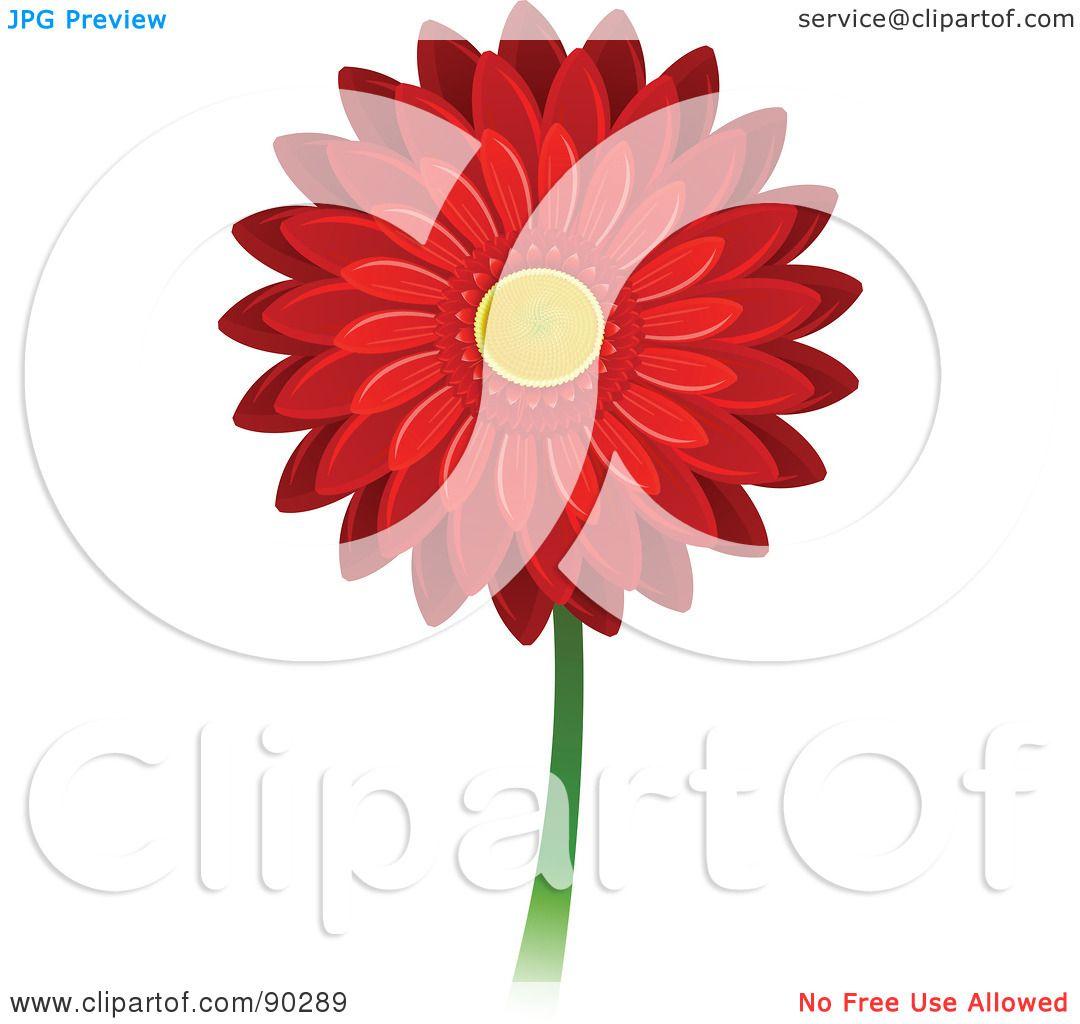 1080x1024 Petal Clipart Gerbera Daisy