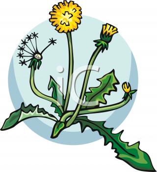 320x350 Flower Dandelion Clip Art Clipart Panda