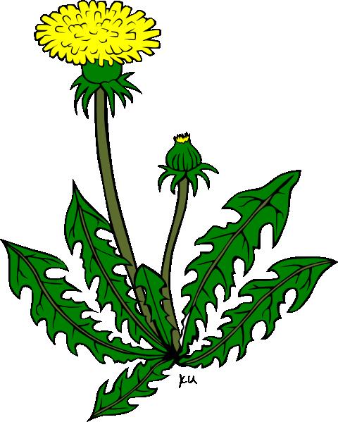 480x599 Flower Dandelion Clip Art Free Vector 4vector