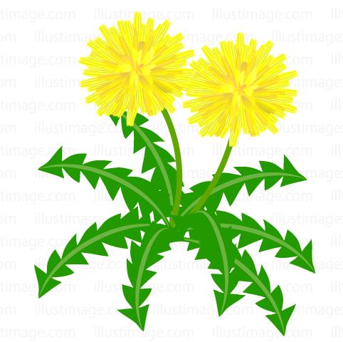 482x480 Free Dandelion Blooming In Field Cartoon Amp Clipart