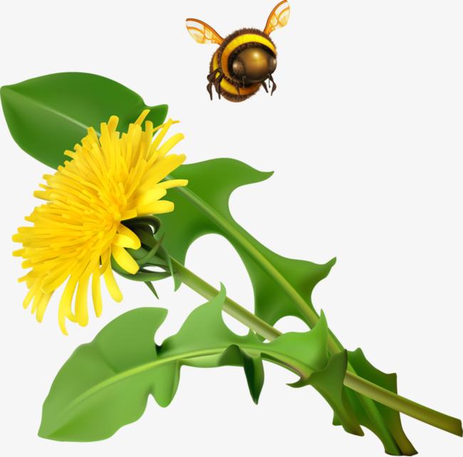 650x642 Yellow Flower Bee, Bee, Dandelion, Yellow Flower Png Image