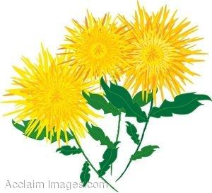 300x273 Yellow Chrysanthemums Clipart