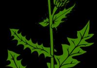 200x140 Weed Clipart Dandelion Clip Art