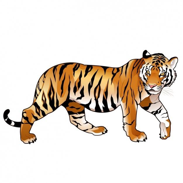 626x626 Tiger Vectors, Photos And Psd Files Free Download