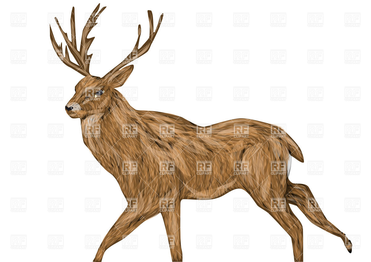 1200x849 Whitetail Buck Isolated On A White Background Royalty Free Vector