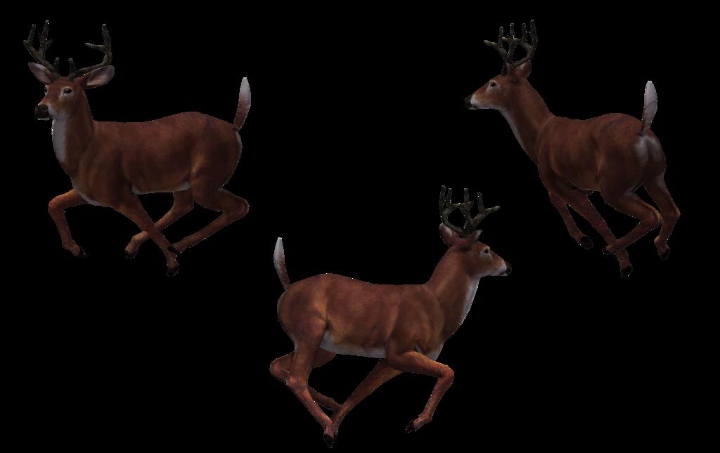 1024x645 Deer