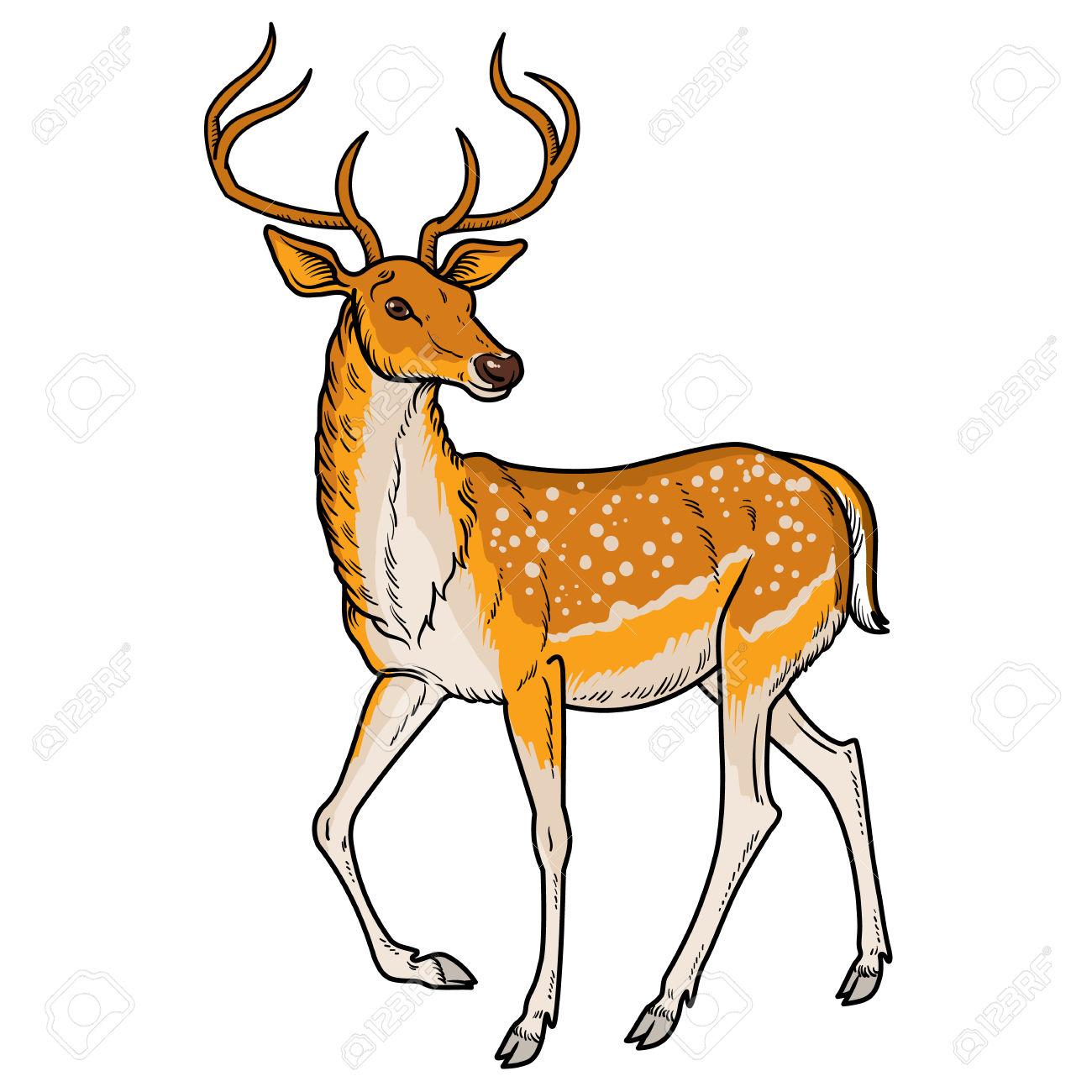 1300x1300 Spotted Deer Clip Art