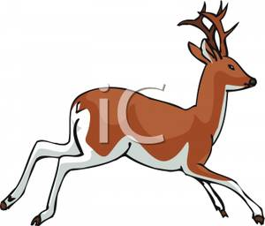 300x256 A White And Brown Deer Clip Art Image