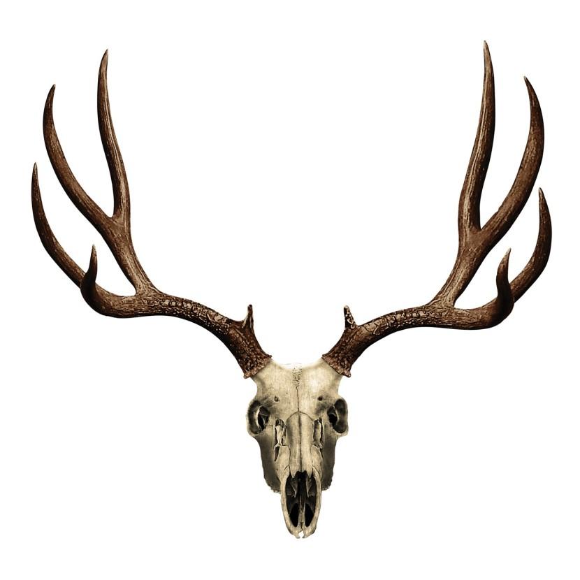 830x830 Deer Skull Clip Art