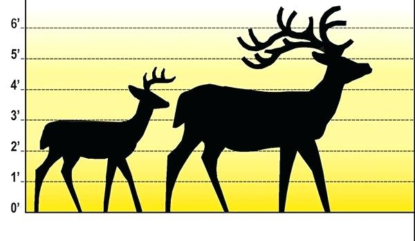 600x349 White Tailed Deer Clip Art The White Tailed Deer Clip Art Deer