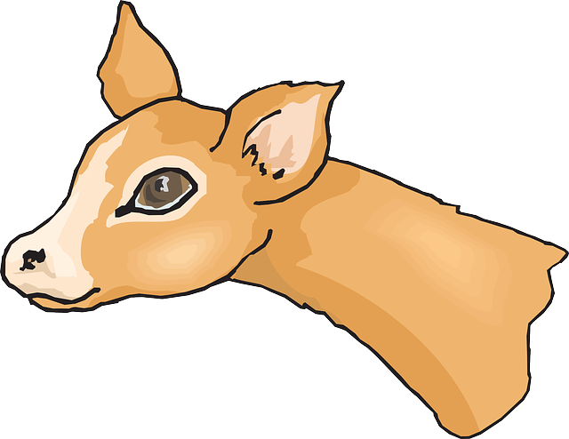 640x494 Stag Clipart