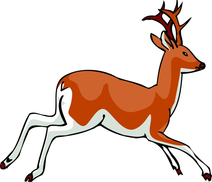 720x616 Deer Species Clipart