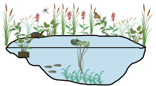 500x277 Collection Of Pond Habitat Clipart High Quality, Free