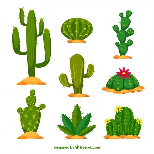 626x626 Cactus Vectors, Photos And Psd Files Free Download