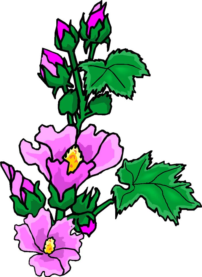 703x961 Are Flowering Plants Clipart