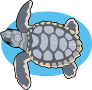 180x177 Search Results For Turtle Tortoise