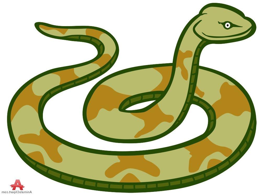 999x746 Anaconda Clipart Small Snake