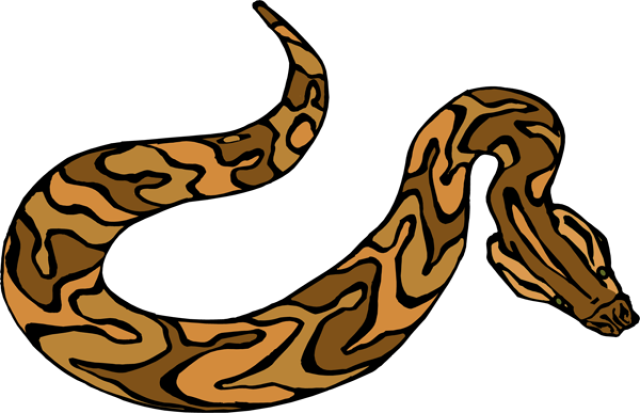 640x413 Boa Constrictor Clipart Brown Snake