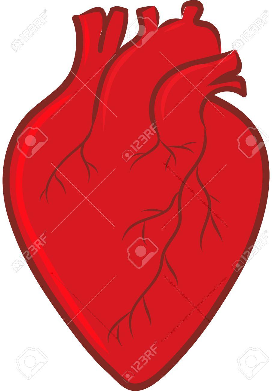 905x1300 Clip Art Heart Human Body Heart Clipart Body