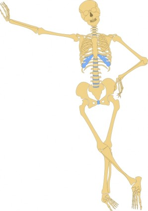 298x425 Human Skeleton Outline Clip Art Free Vector In Open Office Drawing