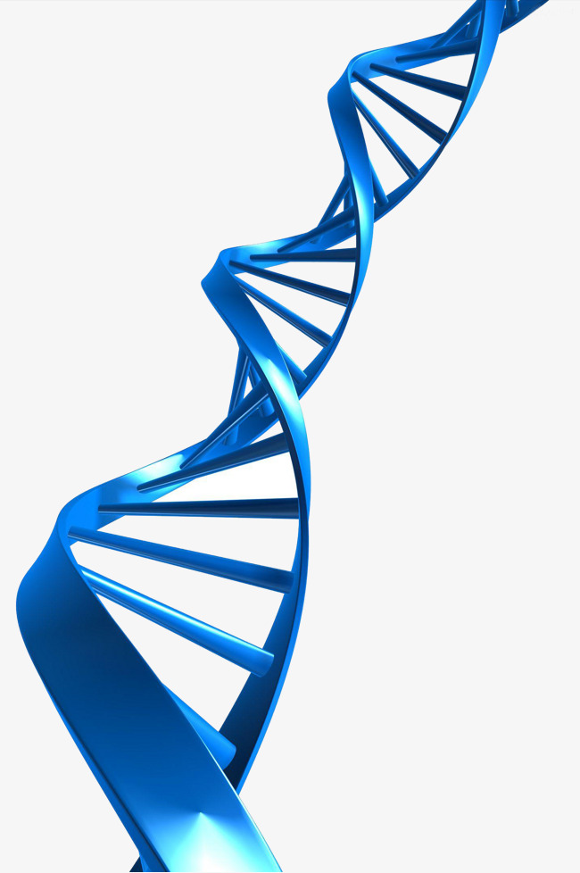 650x978 Dna Material, Dna, Material, Medicine Png Image And Clipart