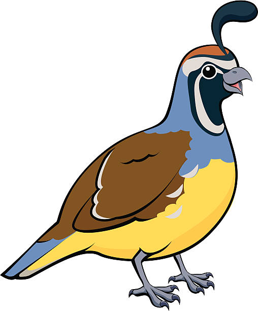508x612 Collection Of Quail Bird Clipart High Quality, Free Cliparts