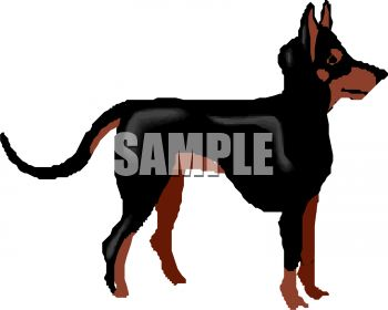 350x280 Doberman Pincer Breed Dog