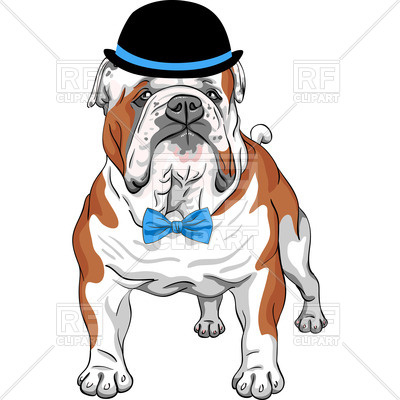 400x400 English Bulldog Breed In Hat And Bow Tie Royalty Free Vector Clip