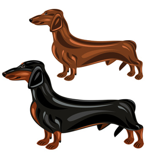 300x325 Two Dachshund Dogs In Show Poses Clipart