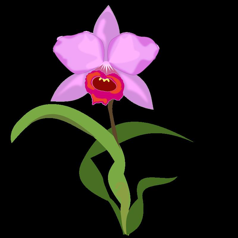 800x800 Dogwood Flower Clipart