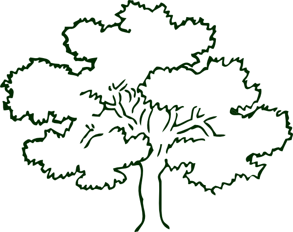 600x475 Dogwood Tree Drawing