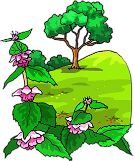 270x324 Collection Of Tree Flower Clipart High Quality, Free