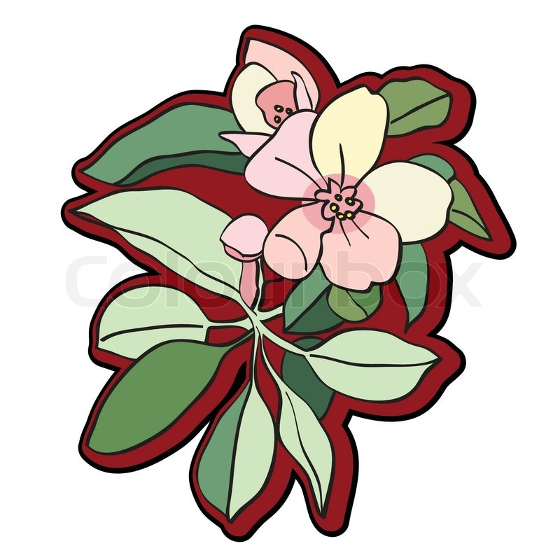800x800 Petal Clipart Tree Flower Free Collection Download And Share