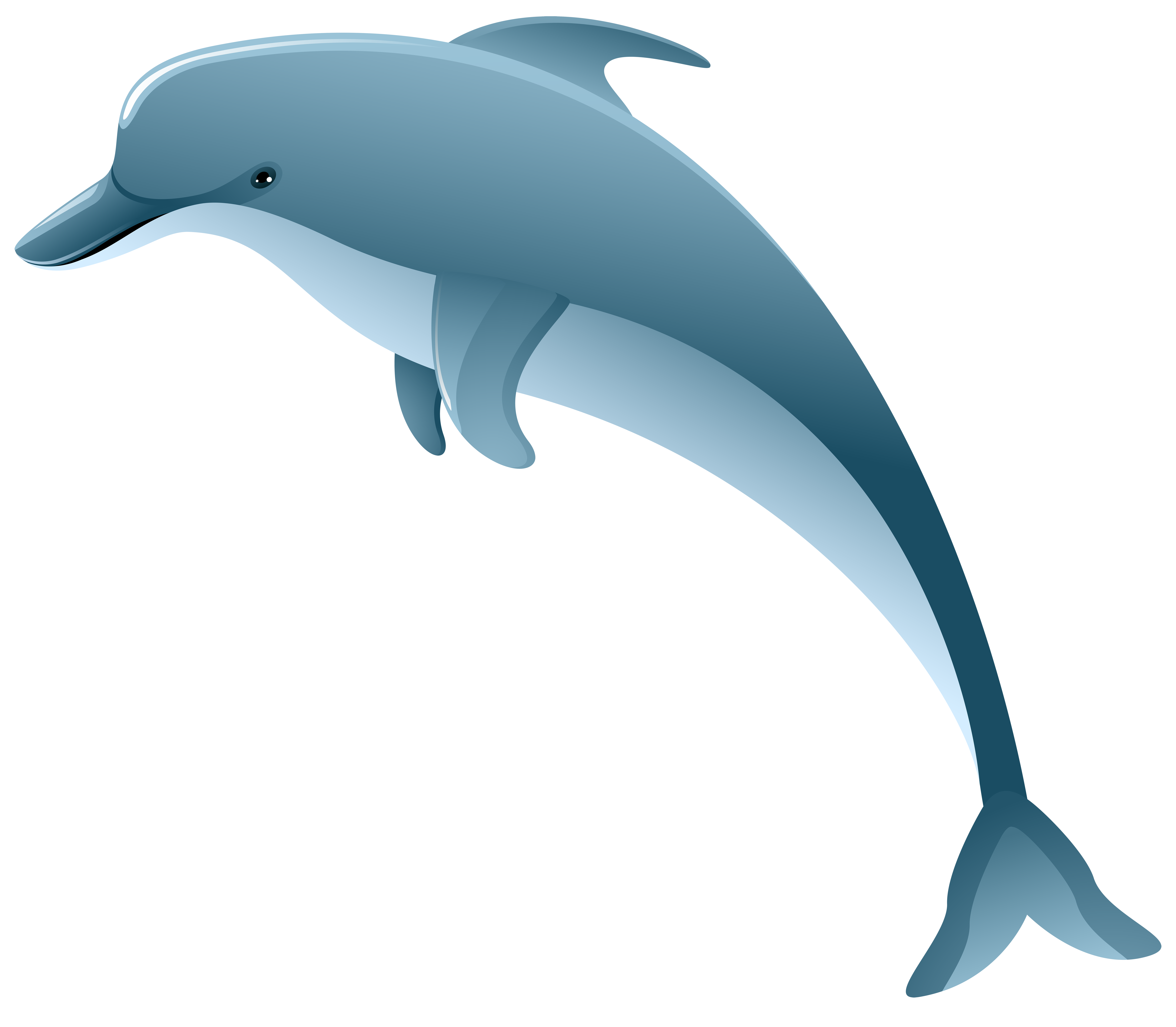8000x6984 Dolphin Png Clip Art Imageu200b Gallery Yopriceville