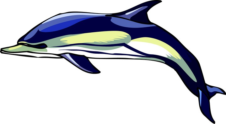 720x395 Dolphin Clipart Free Dolphin Clipart Clipart For Teachers