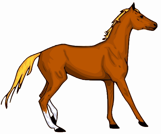 546x456 Little Horse Equestrian Delight Horse And Clip Art