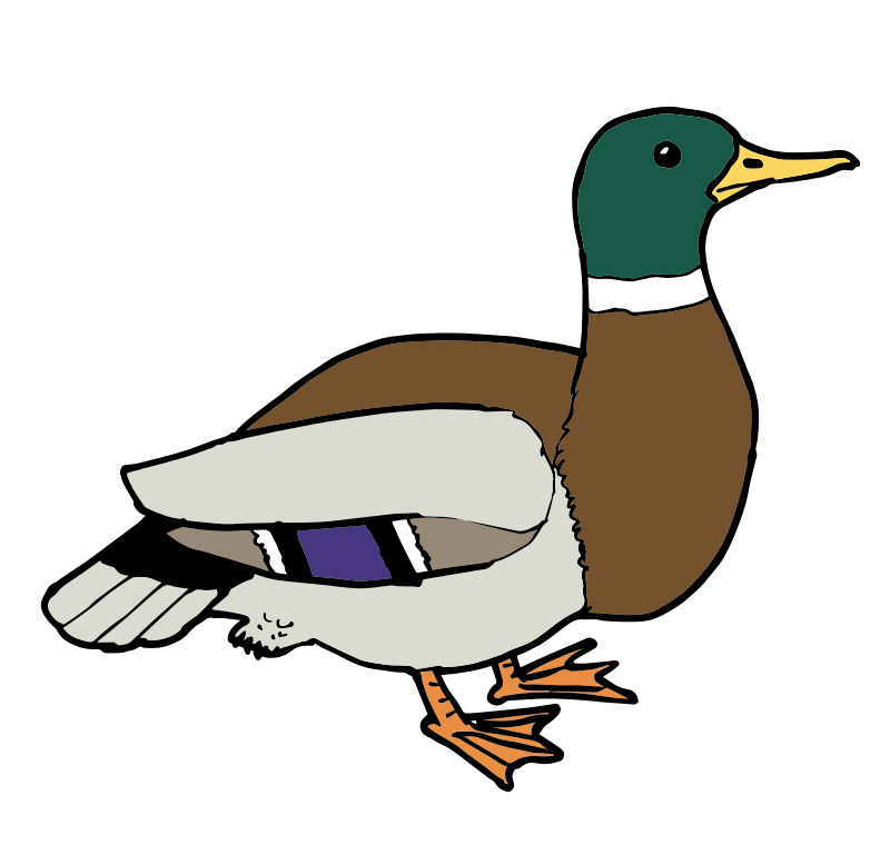 800x760 Free Clipart Duck