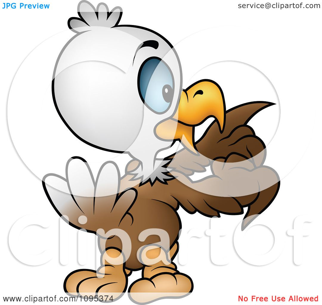 1080x1024 Clipart Bald Eagle Counting His Feathers