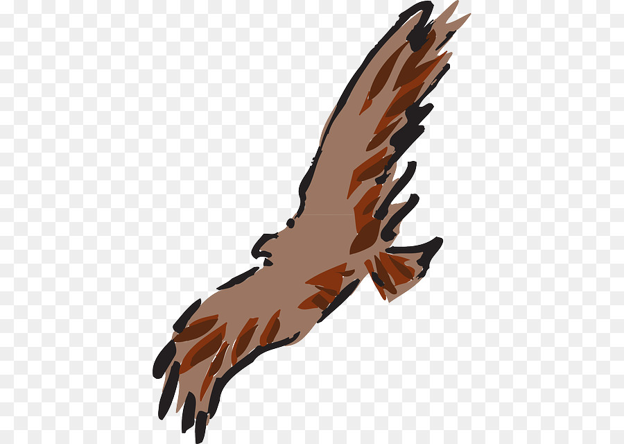 900x640 Eagle Feather Art Clip Art